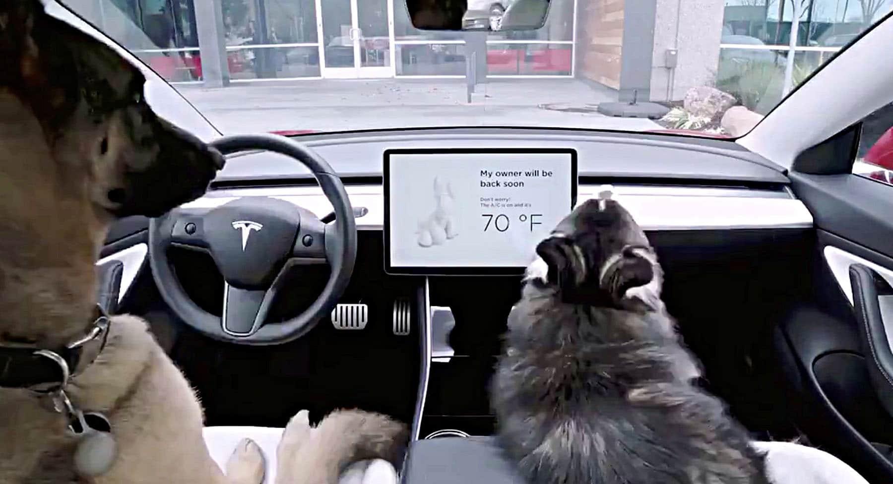 Tesla Sentry Mode and Tesla Dog Mode